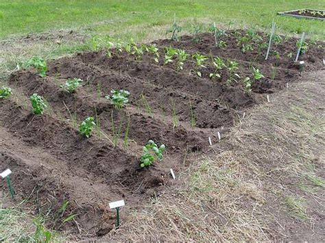 How To Plant A Garden In Your Backyard by Vegetables Garden In Rows Get Growing