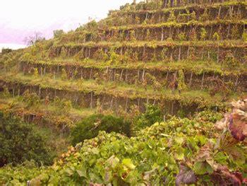 terrazzamenti in collina i terrazzamenti la vite e la nascita vino armacia a