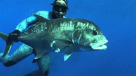 niue dive spearfishing niue