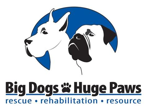 puppies with big paws big dogs paws groupon grassroots