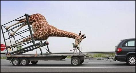 Here Is One Way To Haul In 40 Million A Year by 40 Most Giraffe Pictures That Will Make You Laugh