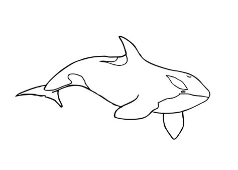Killer Whale Coloring Pages orca whale coloring page coloring home