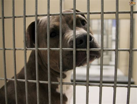 rescue centres all about rescue centres pets4homes