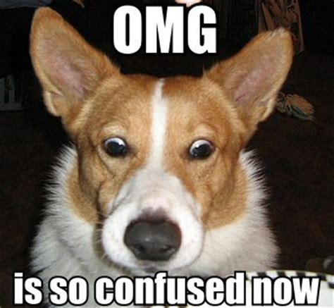 Confused Dog Meme - is so confused now image macros