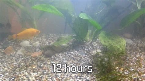10 gallon fish tank is cloudy 10 gallon tank why is my