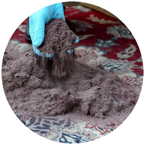 Rug Cleaning Syracuse Ny by Reliable Carpet Cleaning Syracuse Ny Carpet Vidalondon