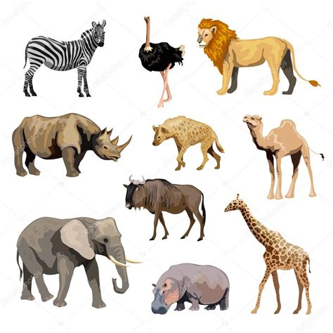 imagenes animales africanos conjunto de animales salvajes africanos archivo im 225 genes