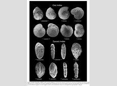 Foraminiferal paleoecology and paleoenvironmental ... Foraminiferal