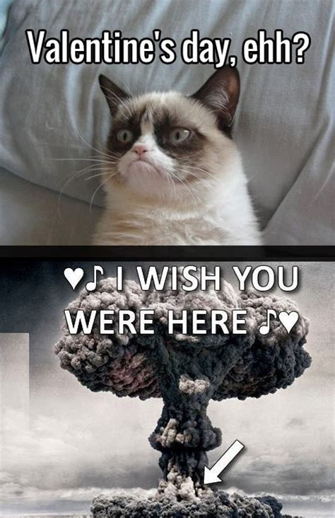 angry valentines day quotes grumpy cat quotes quotesgram