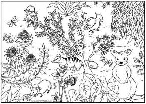 coloring pages australian animals australia coloring page coloring home