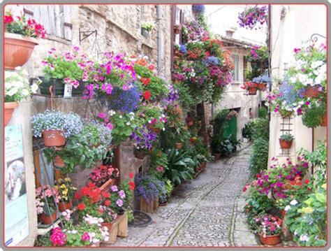 foto di terrazzi fioriti piante da balcone e da terrazzo i nostri consigli
