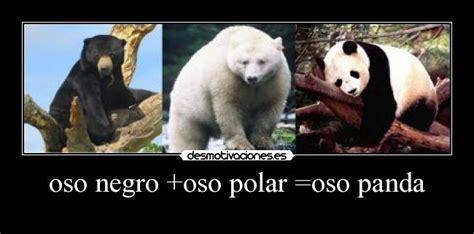 oso polar oso polar 080506902x oso panda y oso polar imagui