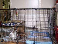 best way to house train a puppy house training your puppy diy dog grooming