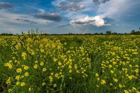 Blooming Flower by Summer Fields