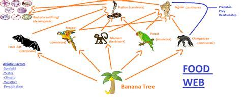chimpanzee food chain diagram chimpanzee food chain diagram 28 images orangutan
