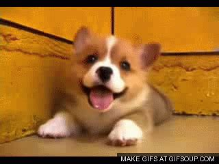 puppy animated gif puppy gifs gifs of puppies