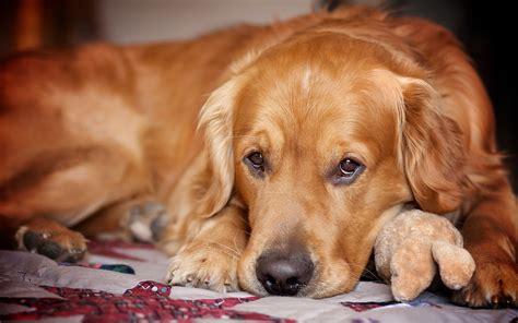 cani per casa razza di per la casa foto di alta qualit 224