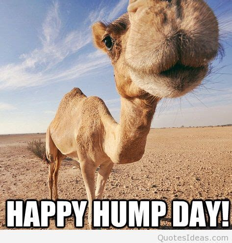Happy Hump Day by Happy Hump Day Quotes Quotesgram