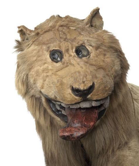 Lion Taxidermy   Frederick of Sweden   Gripsholm?s Castle