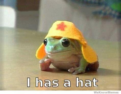 Funny Frog Meme - funny frog meme bachelor frog meme funny pictures dumpaday