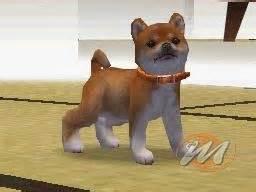 giochi di portare a spasso i cani nintendogs labrador and friends soluzione ds 46353