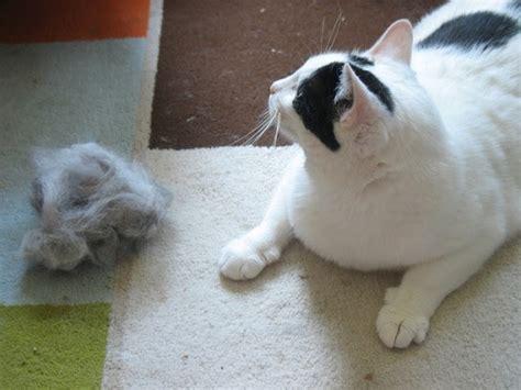 gatos en casa gatos en casa 25 maneras de eliminar los pelos de gato en