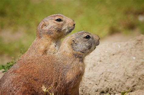 groundhog day 10 groundhog day quotes to remind you that is near