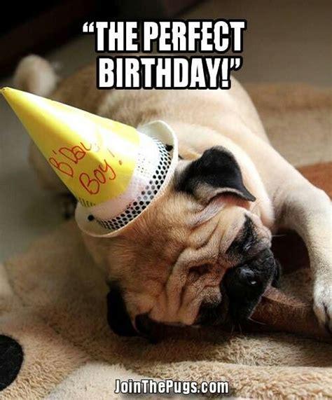 Happy Birthday Pug Meme - birthday pug izzy s pins pinterest