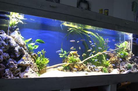 Pompa Aquarium 2000l mon aquarium malawi de 2000l