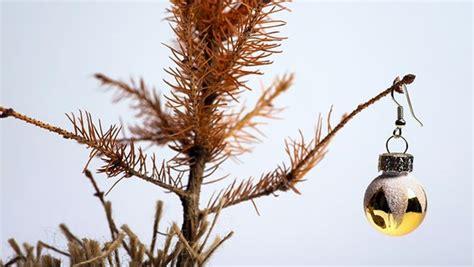 stop christmas tree dropping needlea ein herz f 252 r h 228 ssliche weihnachtsb 228 ume ndr de ndr 1 niedersachsen