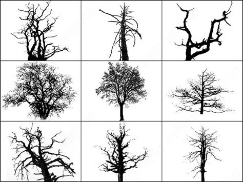 tree pattern brush dead trees brush photoshop brushes in photoshop brushes