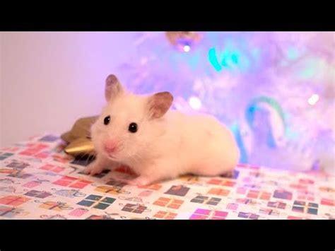 vanillas christmas gift hamster box youtube