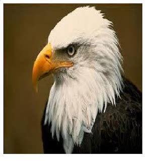 media pembelajaran pgsda  mendeskripsikan ciri ciri paruh burung berdasarkan jenis makanannya