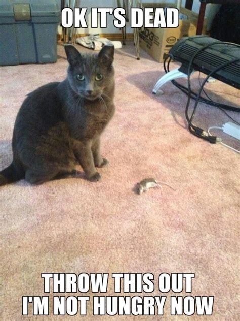 Mouse Meme - clean cat meme guy stuff pinterest meme guy funny