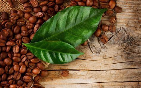 Coffee Bean And Tea Leaf coffee bean and tea leaf wallpaper www pixshark