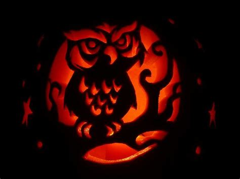 printable owl pumpkin carving patterns 117 best halloween pumpkin carving contest images on