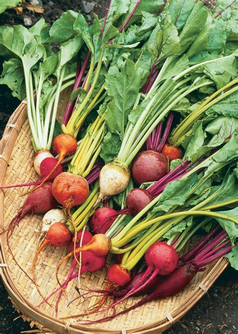 6 vegetables that come in 3 colors beetroot 2 vegetables coloring pages for coloring