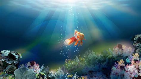 imagenes sorprendentes en hd wallpapers de peces en hd fondos de pantallas animados