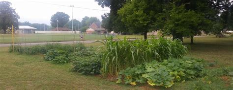 Garden Decatur Al by Aapdep Alabama Chapter Launches Community Garden In