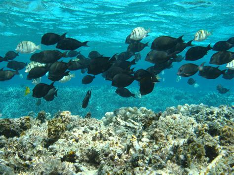 libro el arrecife de las evaluados los peces necesarios para un arrecife de coral sano vista al mar pe 241 237 scola