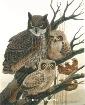 owl prints by charles frace john ruthven and charley