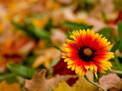 autumn flower autumn field flowers google search autumn pinterest