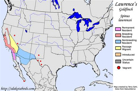 lawrence s goldfinch species range map