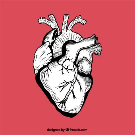 imagenes de corazones organo dibujado a mano coraz 243 n humano descargar vectores gratis