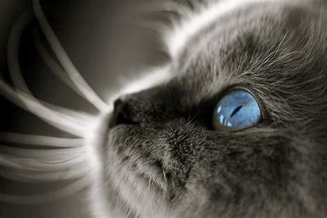 imagenes de ojos verdes de gatos frases sobre gatos ant 237 doto certo
