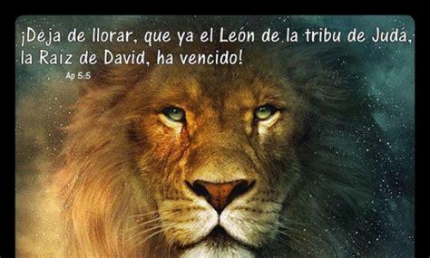imagenes d leones con frases fotos de leones con frases todas frases