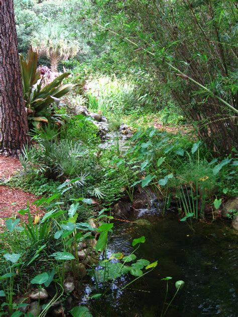 Florida Botanical Gardens Ta Usf Botanical Gardens File Usf Botanical Garden3 Jpg Wikimedia Commons Panoramio Photo Of Usf