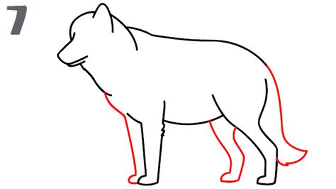 L Drawing Step By Step by Gallery Pictures Of Wolves To Draw Drawing Gallery