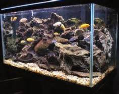 aquascaping african cichlid aquarium 125 gallon african cichlid tank cichlids pinterest cichlids plants and fish