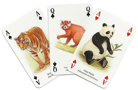 Cards Animals - illustrated asian animal cards from the heritage